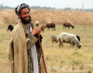 chief shepherd